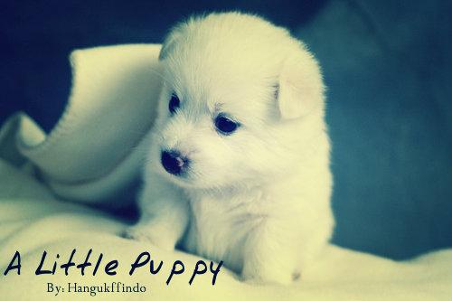 a little puppy
